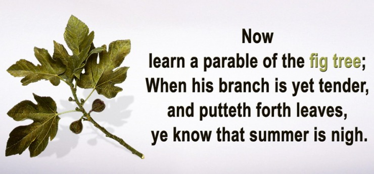 now-learn-a-parable-of-the-fig-tree